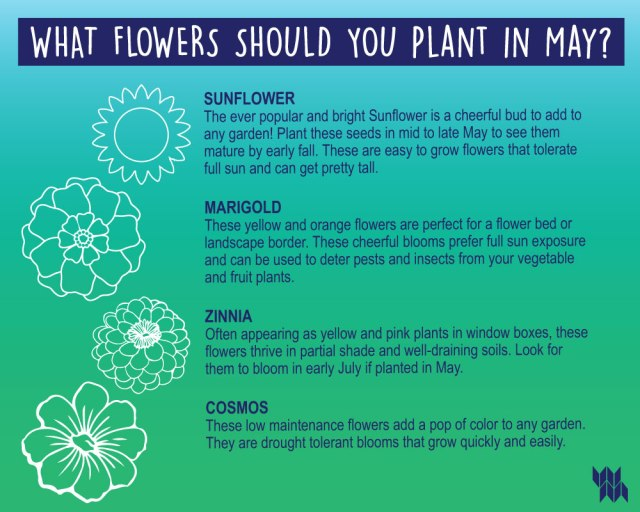 WM_May-Flower-Infographic_5.1.20